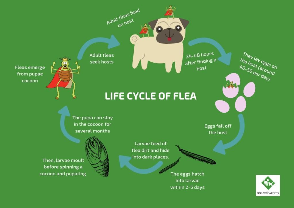 10 Reasons To Treat Your Pet For Fleas London Veterinary Surgeries