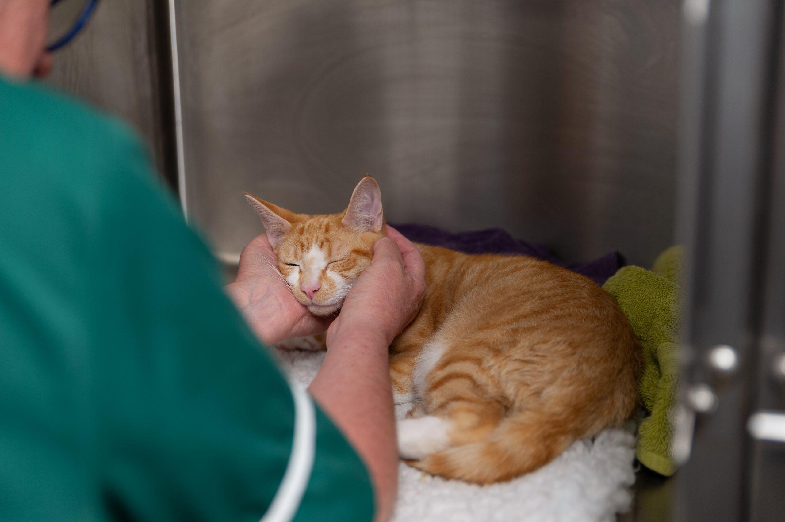 Your FAQs During the Coronavirus Lockdown - London Veterinary Surgeries